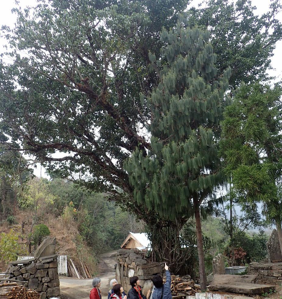 首を飾る木