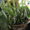 ブータンのブラ糸を探しに北東インド・メガラヤ州クエン村へ