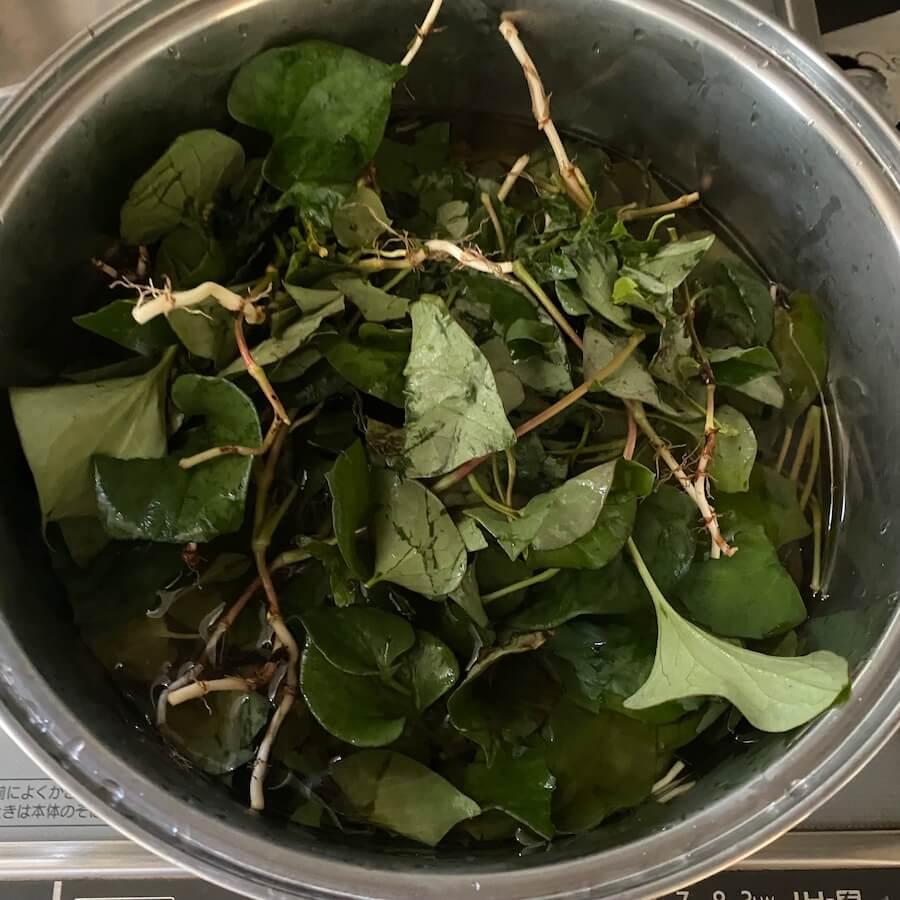 葉を煮出す